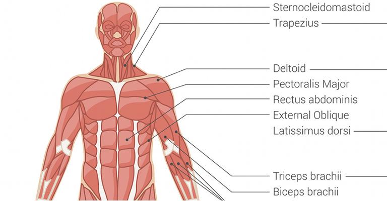 váll sérülések térd tünetek fertőző bursitis és kezelése